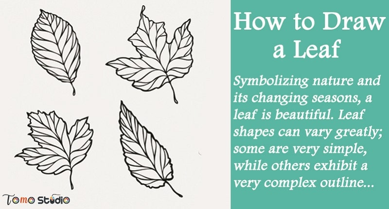 how to draw a leaf easy