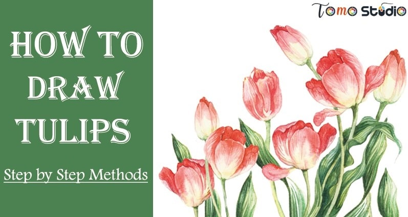 how to draw tulips easy